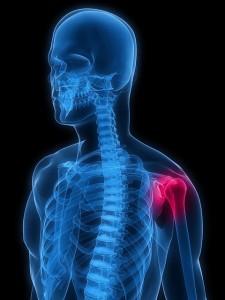 skeleton shoulder