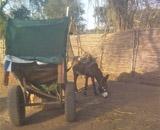 donkey_sudan