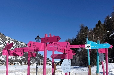 Colourful signs in the snow on a mountain surrounded by Trees.