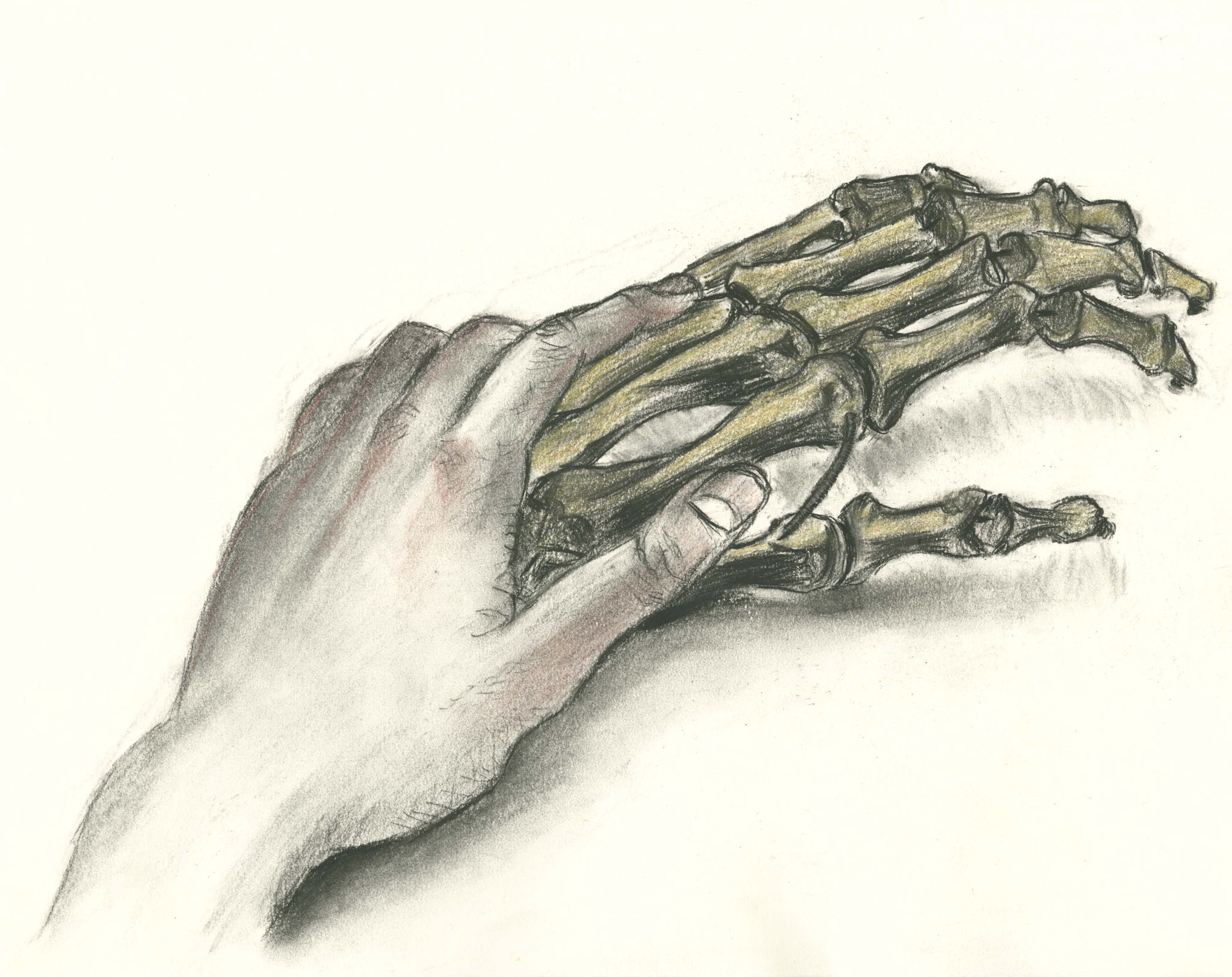 Amy Ou, Hand holding skeleton hand