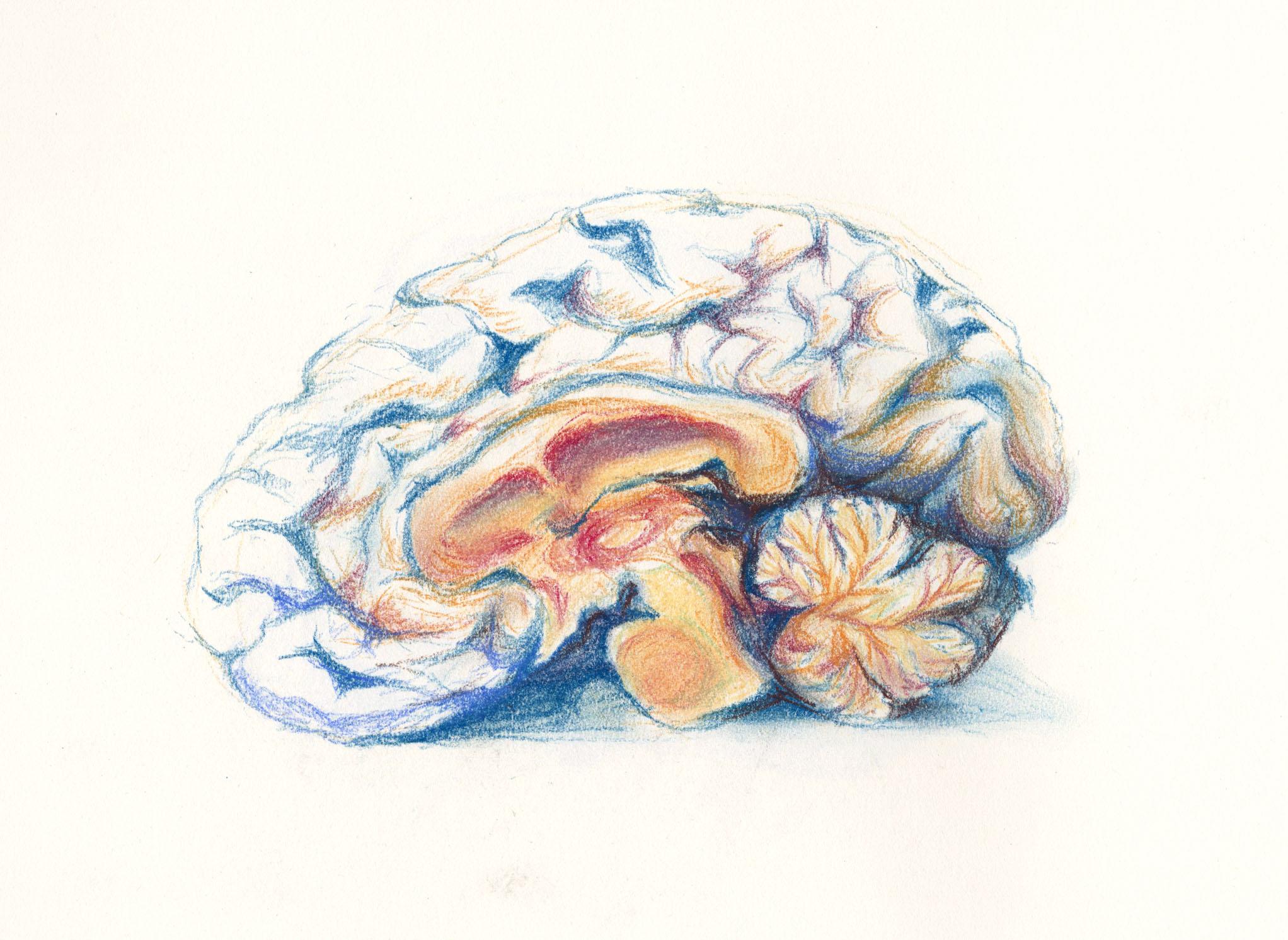 Ginny Bao, Brain